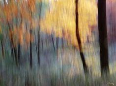 "Saatchi Art Artist Gottfried Roemer; Photography, ""forest of fays"" #art"