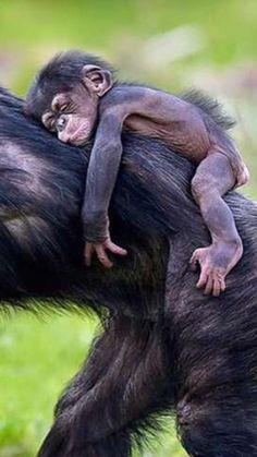 Nature Animals, Animals And Pets, Beautiful Creatures, Animals Beautiful, Pinterest Cute, Cute Baby Animals, Funny Animals, Tier Fotos, Cute Animal Pictures