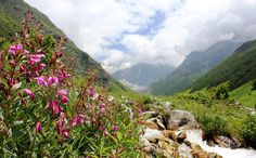 41 Most Mysterious and Interesting Places on Earth - Valley of Flowers National Park , India