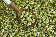 Sprouts allow your body to extract more minerals, amino acids, essential fats, and vitamins from the food you eat. Sunflower and pea sprouts provide the highest quality of proteins. It also detoxifies your liver and blood. Troubles Digestifs, Valeur Nutritive, Sprout Recipes, Mung Bean, Eat Smart, Dietitian, Eating Habits, Sprouts, Healthy Lifestyle