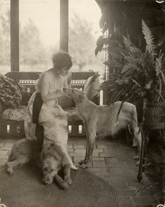 Ms Kitty Gordon, c1918, with an Irish Wolfound and possibly a pale Deerhound, or Borzoi maybe ... lovely pic, whatever ...