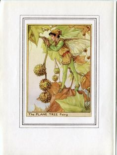 Plane Tree Flower Fairy Vintage Print, c.1950 Cicely Mary Barker Book Plate Illustration by TheOldMapShop on Etsy