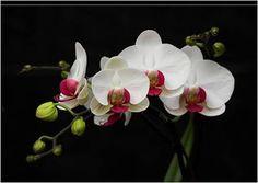 Klip7 Entretencion: Flores exoticas blancas  [5-3-16]
