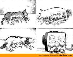 Mamíferos alimentándose = Zoogdieren voeden.