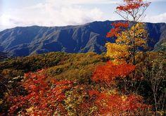 知る人ぞ知る日本の秘境。「しらびそ高原」と「下栗の里」の紅葉 | RETRIP