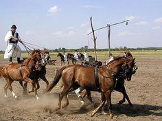 Madziar na koniach