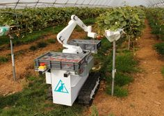 Agri-Tech East REAP conference 2016. Pictured: Dogtooth's prototype fruit-picking robot at work during trials.