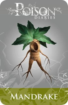 Baneful Herbs P22 Mandrake (Mandragora officinarum) The famous and well known Mandrake, there is not a witch today who would not know this plant for it has to be the most famous in antiquity known throughout the world for many centuries. It was once known as the herb of Circe and was the herb Medea used to help Jason steal the Golden Fleece. It is the herb used in Harry Potter and the Chamber of Secrets to de-petrify the students – Deadly Plants, Poisonous Plants, Which Witch, Edible Plants, Medicinal Plants, Poison Garden, Kitchen Witchery, Hedge Witch, Witchcraft
