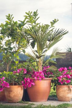 Green Screens: Fast-Growing Privacy Plants For Your Patio Balcony Plants, Patio Plants, Tall Plants, Shade Plants, Plants That Like Sun, Full Sun Plants, Privacy Planter, Backyard Privacy, Garden Shop