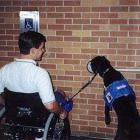 You Should Not be Charged Pet Fees for Your Service and Therapy Animals - A limited mobility blogging extravaganza at RollingWithoutLimits.com