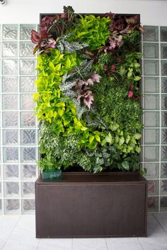 vertical garden Add a Lush Wall Garden to Your Home or Office with Our Auto-Irrigated Vertical Wall Garden Systems. Just Add Potted Plants! Balcony Garden, Indoor Garden, Garden Plants, Potted Plants, Garden Walls, Green Garden, Garden Office, Plants Indoor, Indoor Outdoor