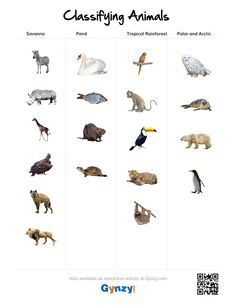 Teaching with help of the interactive whiteboard in a simple and effective way Classifying Animals, Interactive Whiteboard, Arctic, Pond, Keys, Tropical, Random, Water Pond, Animal Classification