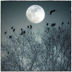 The moon, birds, and trees.... Three of my favorite things.