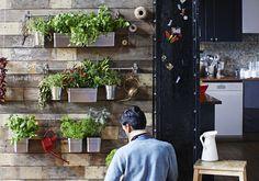 En indendørs urtehave på væggen