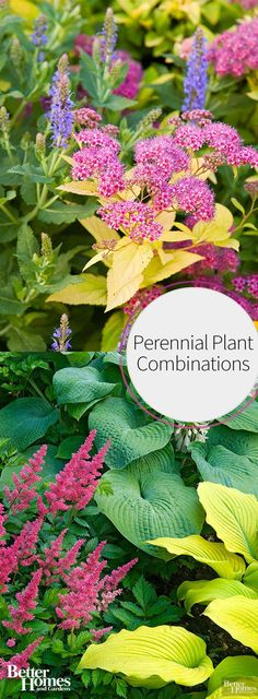 Add perennials to your landscape design for a low-maintenance and beautiful garden. These great plant combinations will inspire you to add more colorful perennial flowers to your yard and to your front porch.
