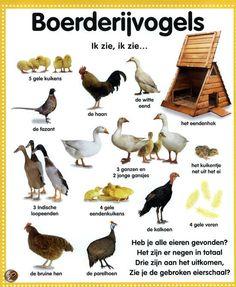 Learning Dutch - birds that live on the farm Learn Dutch, Dutch Words, Dutch Language, South Holland, Dutch Recipes, Animals And Pets, Learning, Live, School