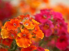 MAGGIO! http://www.thegreenrevolution.it/maggio-arancione-e-generoso/