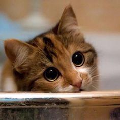 장화신은 고양이 실사판!
