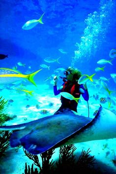 Scuba Diving vacations are a very popular way to add a little adventure to your vacation. Some people will go on a scuba diving vacation to try something new while others are such avid divers they will plan almost every vacation around diving. Scuba Diving Jobs, Best Scuba Diving, Sea Diving, Cave Diving, Fauna Marina, Beautiful Sites, Beautiful Ocean, Great Barrier Reef, Marine Life