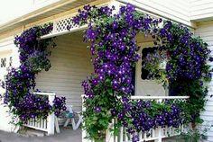 Flawless 55+ Best Ideas For Garden  Plants  With Low Maintenance http://goodsgn.com/gardens/55-best-ideas-for-garden-plants-with-low-maintenance/