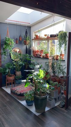 Thanks merlesnorden for this post.Sacred Space Redesign for Fall.Having a sacred space is essential to my well-being. Because my sacred element is plants, you'll see a lot of houseplants in my sacred space! I like to redesign my space with the# Fall Hanging Plants, Indoor Plants, Indoor Plant Decor, Hanging Baskets, Garden Design, House Design, Plant Design, Decoration Plante, Flowers Decoration