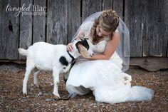 006-farm-wedding-goat