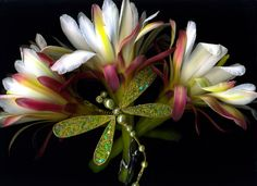 Dragonfly Cactus by Debbi Swanson-Patrick Award Winning Photography, Create Image, Old Jewelry, Local Artists, Dena, Creative, Cactus, Studios, Prickly Pear Cactus
