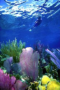 Snorkeling in Puerto Rico!   ASPEN CREEK TRAVEL - karen@aspencreektravel.com