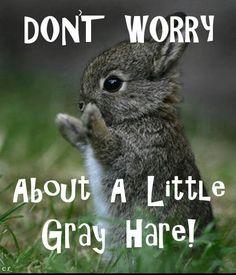 GRAY HARE :)