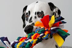A DIY dog tug toy woven out of DIY woven dog tug toys? Oh yes we did! Here's how it's made!