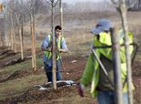 620,000 trees being planted to honor Civil War dead The goal is to plant one for each soldier who died in the line of duty.