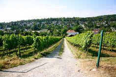 Heart Of Europe, Vienna Austria, In The Heart, Vineyard, Outdoor, Life, City, Nature, Garten