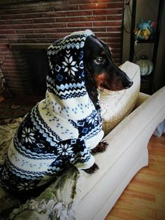Doxie Christmas sweater
