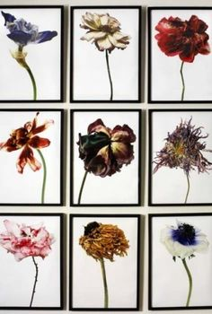 Rachel Lévy WHAT? a collage of different wiltered/ decayed flowers WHY? to show different flowers decaying