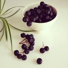 aronia berries ( tons of antioxidants, anti cancer properties )  delicious too!