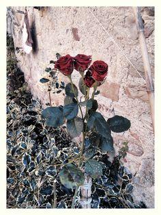 Bolognashire: le tre rose