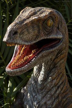 O veloz Velociraptor, também conhecido como Raptor. Você pode acessar jogos online & grátis de dinossauros acessando o link - http://www.jogoson.com.br/jogos-de-dinossauros/