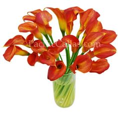 Tinted orange calla lilies. Perfect for bouquets - better alternative than the plain white calla lilies.