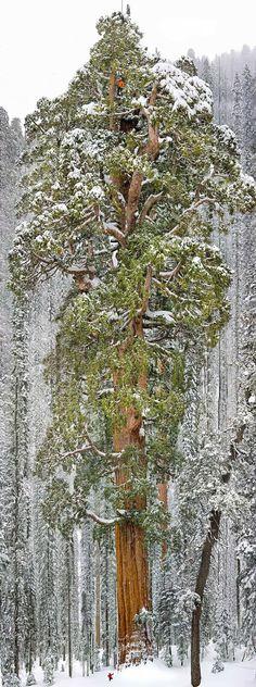16 wunderschöne Bäume, wie aus einer anderen Welt... - ☼ ✿ ☺ Informationen und Inspirationen für ein Bewusstes, Veganes und (F)rohes Leben ☺ ✿ ☼