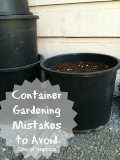 5 Container Gardening Mistakes to Avoid
