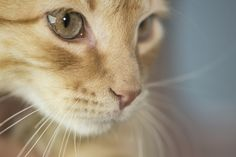 Macro Cat (by Dual Time Studio)