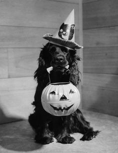 Vintage Halloween photo - sweet dog trick or treating!