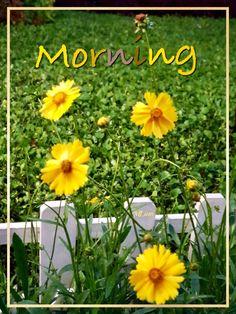 Monday Morning, Good Morning, Flowers, Plants, Gud Morning Images, Be Nice, Buen Dia, Bonjour, Plant
