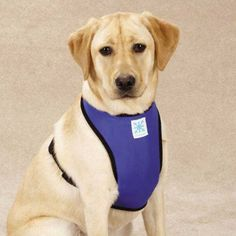 Guardian Gear Cool Pup Dog Cooling Harness, Large Guardian http://www.amazon.com/dp/B00BJAEO48/ref=cm_sw_r_pi_dp_UIH4vb1T5D0AD