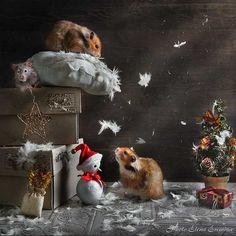 awaiting Santa by Elena Eremina on 500px