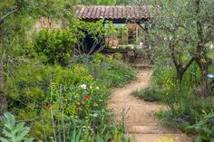 A Perfumer's Garden in Grasse at the Chelsea Flower Show / RHS Gardening