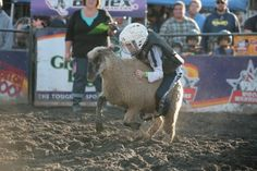 Watch a Kid-Sized Rodeo