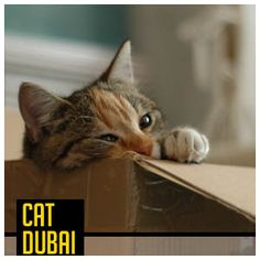 Flu, Pet Care, Dubai, Remedies, Pets, Summer, Animals, Summer Time, Animales