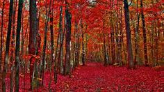 Quebec, Canada in Fall. Autumn Trees, Autumn Leaves, Autumn Forest, Free Spring Wallpaper, Red Tree, Back Road, Nature Images, Quebec, Cool Photos