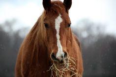 wild horse closeup - Google Search